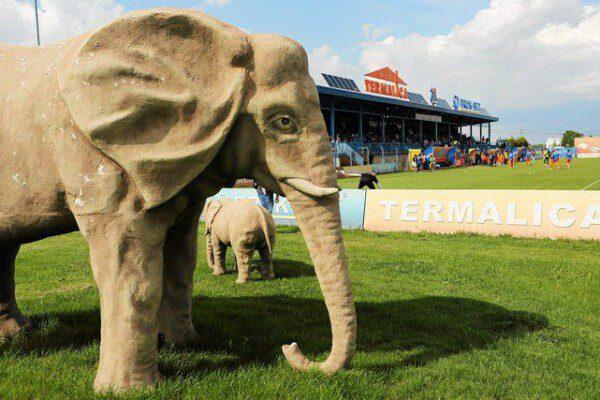 Los 'elefantes' que vigilan el ya remozado estadio del Termalica Nieciecza/ Narodni News